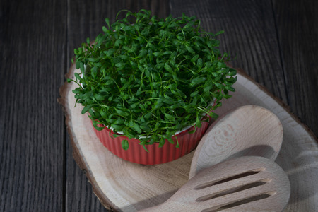 Contrast of red and green. Fresh cress salad in red pot macro shot selective focus.