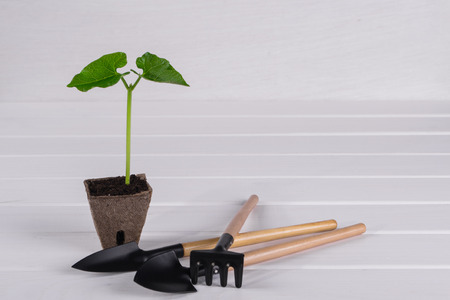 Pot with young seedling on white wooden background. Springtime concept Stock Photo