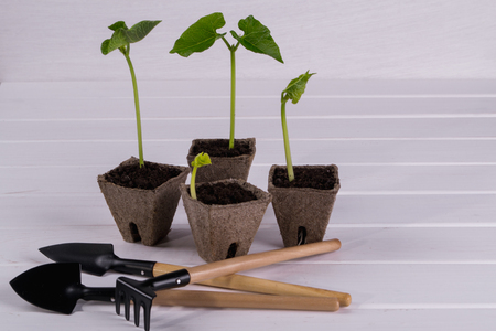 turba: Pots with young seedlings  and little garden tools  on white wooden background Foto de archivo