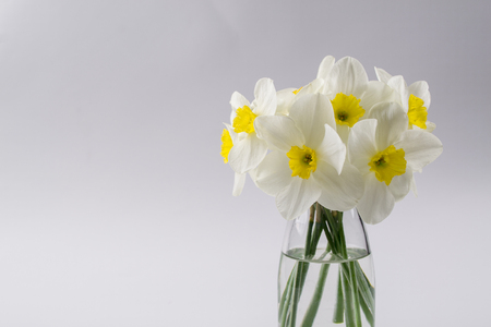 White narcissus in a glass vase. Spring Flower in minimalistic