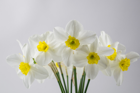 Flower blur. Soft selective focus.  Spring background  with blurry narcissus. Closeup Reklamní fotografie - 78866508
