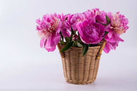Fresh bouquet of peonies in a  basket  isolated  on a white background