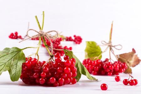 Bunch of fresh ripe organic viburnum berries  on white background. Ingredients for vitamin healthy  beverage