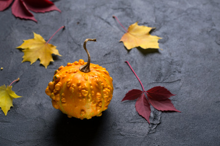 Mini pumpkin and autumn colorful  leafs on dark concrete background. Mockup for seasonal offers and holiday post card