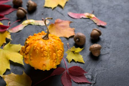 Mini pumpkin and autumn colorful  leafs on dark concrete background. Mock up for seasonal offers and holiday post card