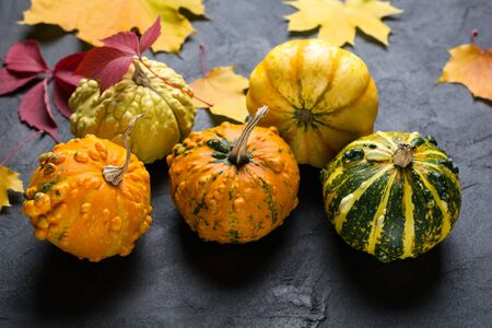 Composition of a different varieties of mini pumpkins and autumn colorful  leafs on dark concrete background