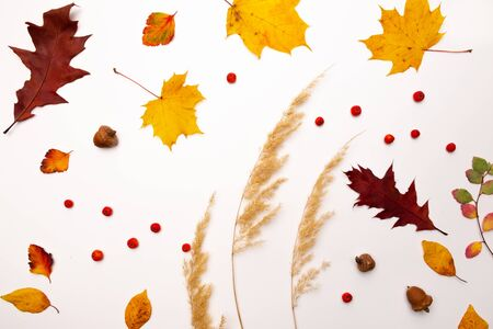 Set of beautiful autumn dried leaves on white background. Fall concept. Autumn background. Flat lay, top view Stockfoto