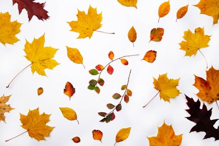 Autumn background. Leaves. Maple leaves on white background. Flat lay, top view. Copy space for seasonal promotions and discounts. Stockfoto