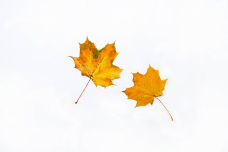 Set of beautiful autumn dried leaves on white background. Fall concept. Autumn background. Flat lay, top view, copy space