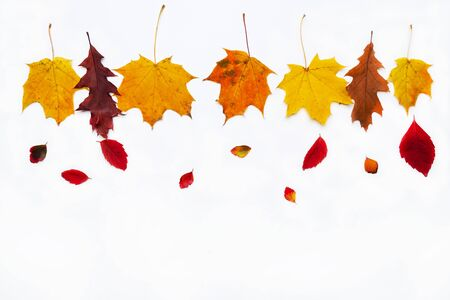 Autumn border made of  fall leaves on white background. Flat lay, top view. Copy space for seasonal promotions and discounts. Stockfoto