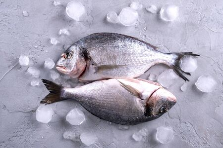 Whole raw raw bream fish on ice cubes on a gray background.Top view with copy space.