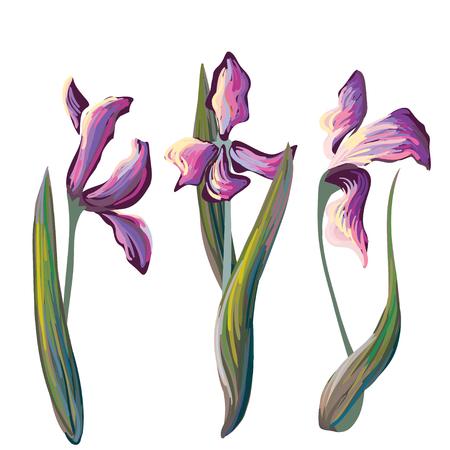 hand brushed: Vector set of 3 iris flowers