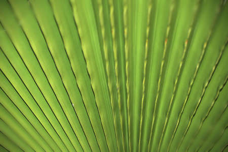 Palm tree leaf close up photo