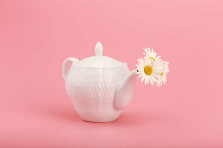White porcelain tea pot with camomile flowers against pink background. Concept of herbal tea and wellness