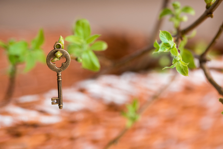 Ancient vintage key on a tree branch, green young leaves. spring and summer visionCopy space. Top view. Stock Photo