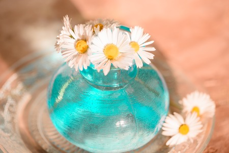 Daisies In A Blue Vase Chamomile Blue Vase Chamomile Stock Photo