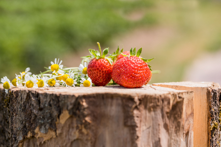 Strawberry on a wooden stump, chamomile flowers with sun light at dawn. Standard-Bild