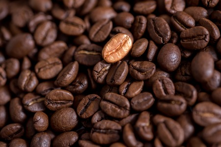 Individuality, standing out from a crowd concept, close up of a single bright, gold coffee bean over many dark ones with copy space.
