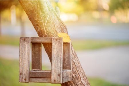 Bird feeder on the tree.