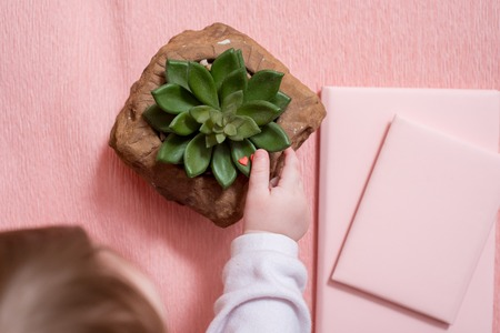 The hand of the little baby. A cute baby. Pink notebook, cactus succulent on a pink 스톡 콘텐츠
