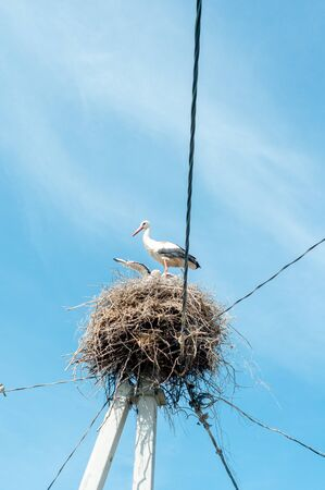 White stork family nest with little babies. In a big nest against the sky