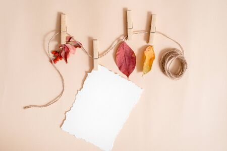 Mockup paper for your notes. torn paper trend.Autumn leafs in a clothes line held by clothespins. elderberry and barberry, fruits and dry leaves. Autumn card,Flat lay, top view. copy space