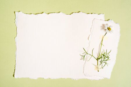 Medicinal herbs. Clover, Blue cornflower a green background, Postcard, torn paper. Botanys top view, copy space, flat lay. 写真素材
