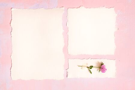 Medicinal herbs. Clover a pink background, Postcard torn paper. Botanys.top view, copy space, flat lay