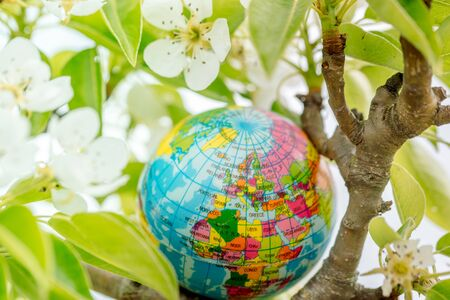 Globe in a flowering tree. Sakura or apple tree flowers. Save the nature. Enviroment. April 22 earth day theme.Summer day, concept of ecology and saving the planet