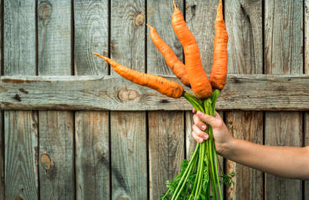 Summer bouquet with organic carrots in woman hands