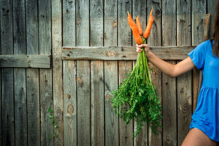 Summer bouquet with organic carrots in woman hands,