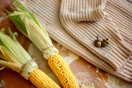 Autumn composition flatlay. Ear of corn and yellow pumpkins on a knitted cozy sweater.