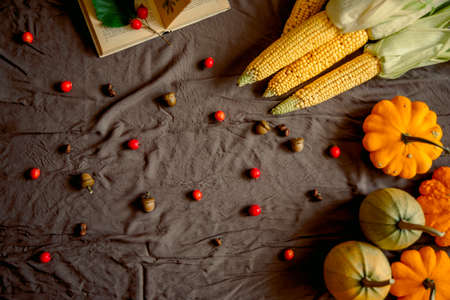 Hello fall. Cozy autumn image. yellow pumpkins, acorns and berries, corn cob and squash on Dark background. Happy Thanksgiving