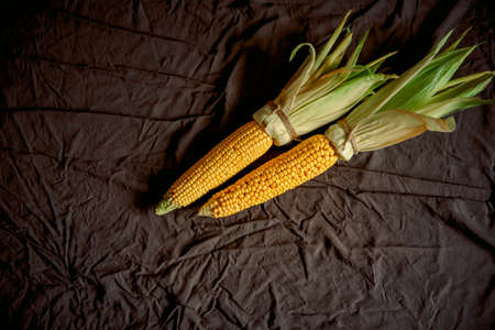Ripe young corn cob with leaves on black background