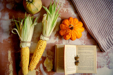 Ear of corn and yellow pumpkins on a knitted cozy sweater