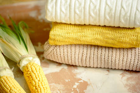 autumn corn on yellow knitted sweater . Cozy autumn atmospheric image. Happy Thanksgiving Archivio Fotografico