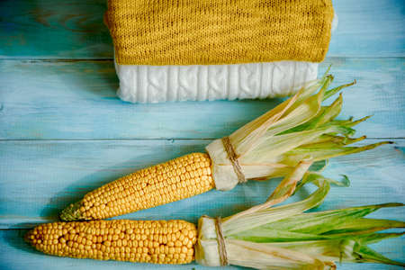 Freshly picked corn on a blue wooden background, knitted cozy sweater