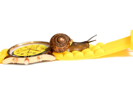 Yellow wristwatch and snail isolate on white. clock hands. concept of time, slow, waiting, Time management. copy space. Reklamní fotografie