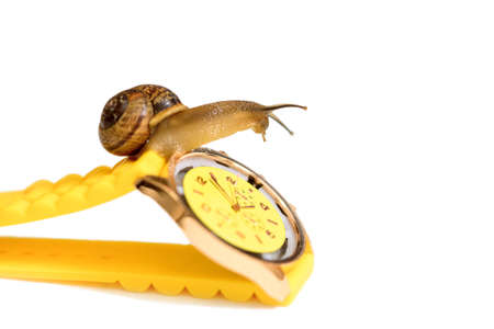 Yellow wristwatch and snail isolate on white. clock hands. concept of time, slow, waiting, Time management. copy space. Archivio Fotografico