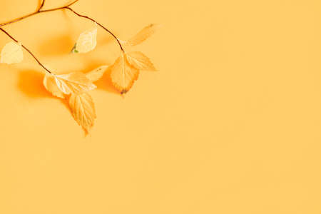 Flat lay of nature pattern colorful autumn leaves on yellow background. Seasonal concept Archivio Fotografico