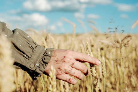 young girl is dancing in a wheat field. Runs his hand over ears. Stands with his back. Hair flying in the wind, life style. emotionally spinning and jumping. freedom concept and hot summer