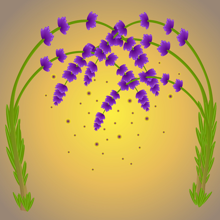 Magic lavender branches purple color and the falling pollen Banque d'images - 116846443