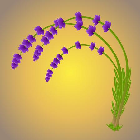Magic lavender branch purple color with the falling pollen Banque d'images - 116846444