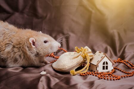 Perling rex dumbo cute rat on brown background sits near New Year bag with presents and house, symbol of the year 2020 Zdjęcie Seryjne