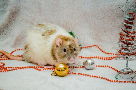 White and yellow rat on fur background with New Year tree, orange and silver balls, symbol of the year 2020