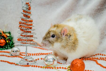 White and yellow cute rat on fur background with New Year tree, orange ball, symbol of the year 2020, with copyspace Stok Fotoğraf