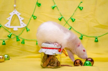 White rat with cute ears and red eyes sits on a New Year gift jar with a ribbon on a yellow background with a Christmas tree and bells, sniffing balls, symbol of 2020