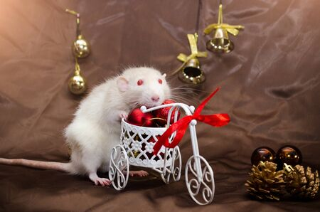 White albino rat with red eyes sits on a bicycle with red balls and ribbon, in New Year decorations with bells, on a brown background with a copyspace for a postcard Banco de Imagens