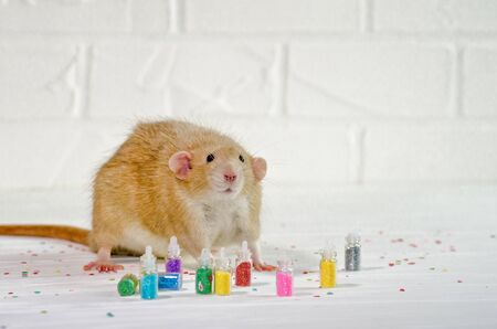 Ginger rat sits on a white background near a bottles with sparkles, a concept for a new year or nail service or for greeting card with copyspace Banco de Imagens