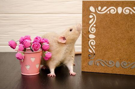 White rat sits near a beautiful openwork wooden stand, sniffing it, with a bucket of pink rose flowers, on black and white wooden background. Picture for a greeting card. Banco de Imagens